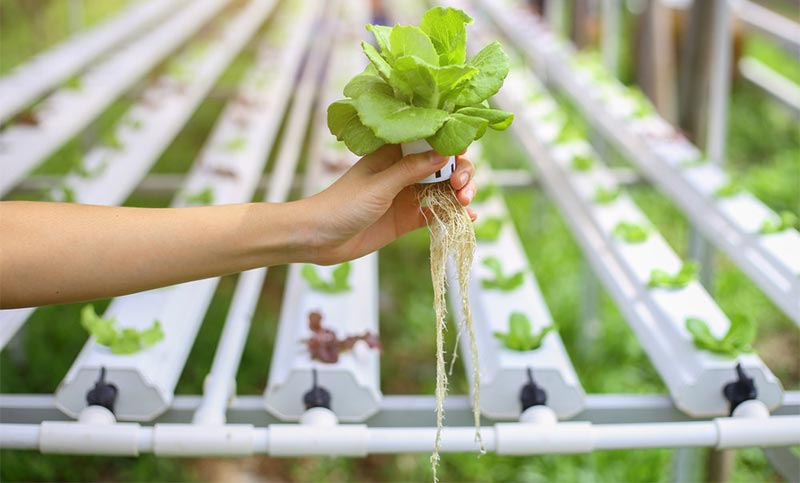 Homemade Hydroponic System Step By Step