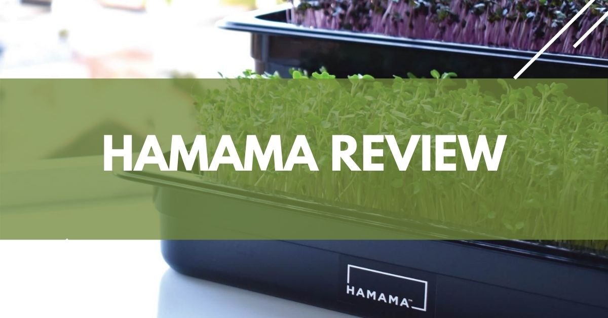 Hamama Review