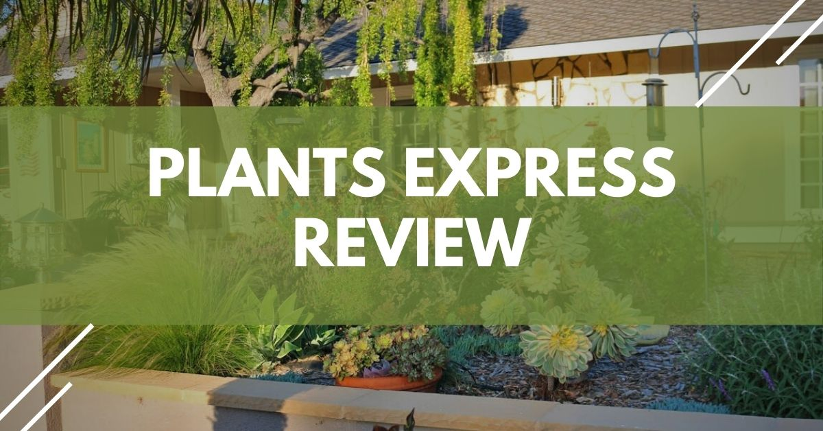 Plants Express Review