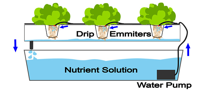 Drip Systems