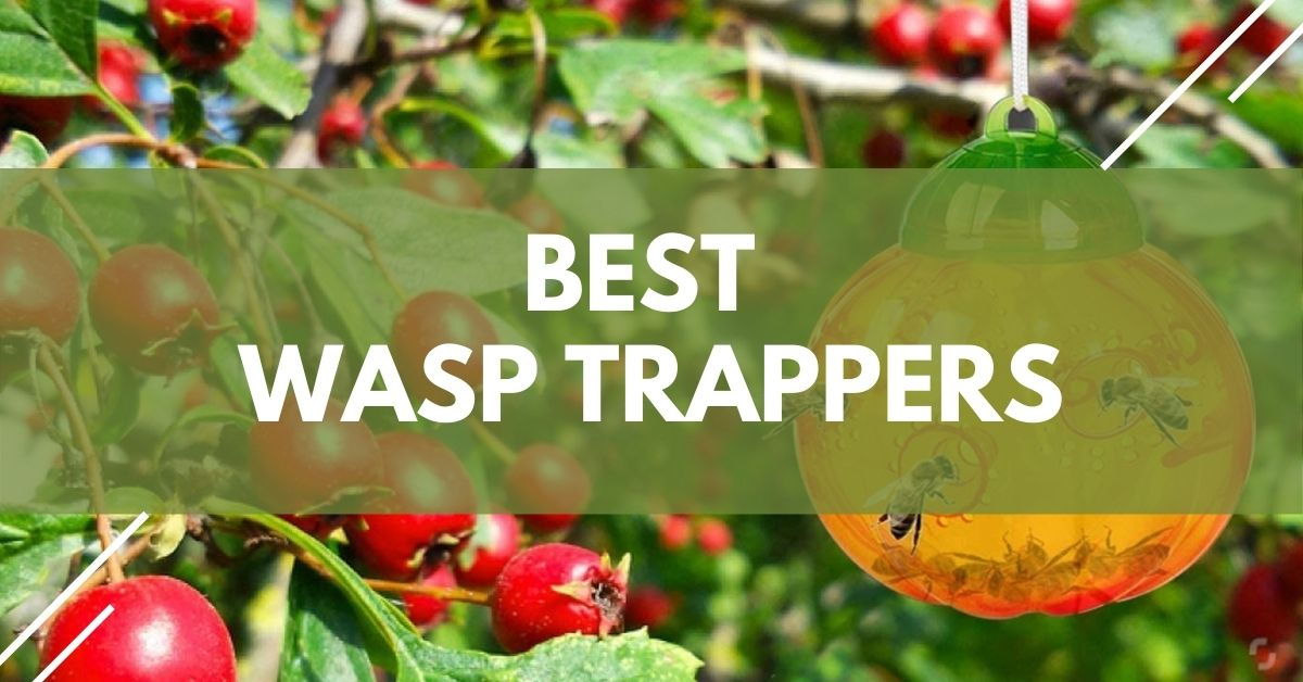 Best Wasp Trappers