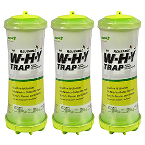 Rescue! Why Trap for Wasps, Hornets, & Yellowjackets