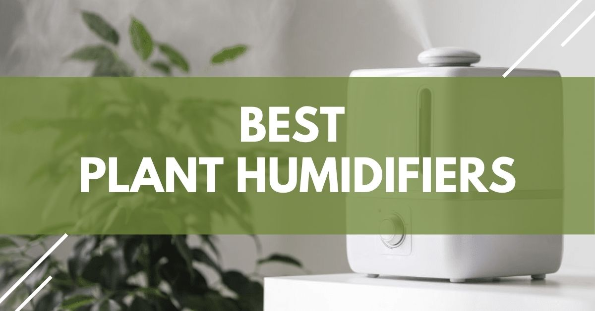 Plant Humidifiers