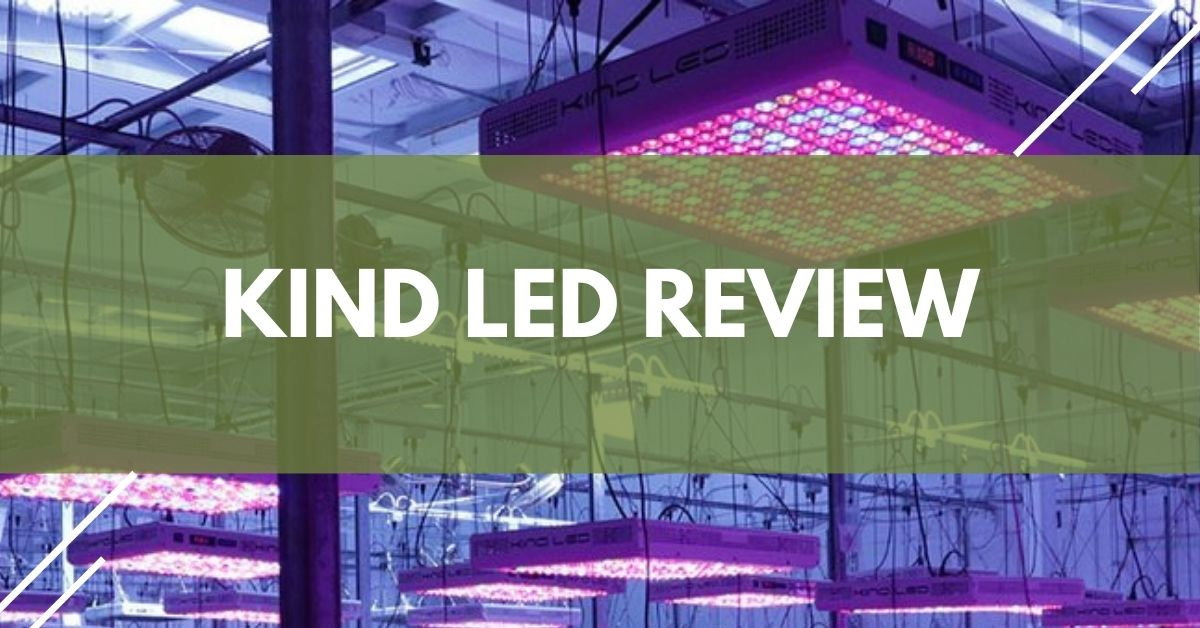Kind LED Review
